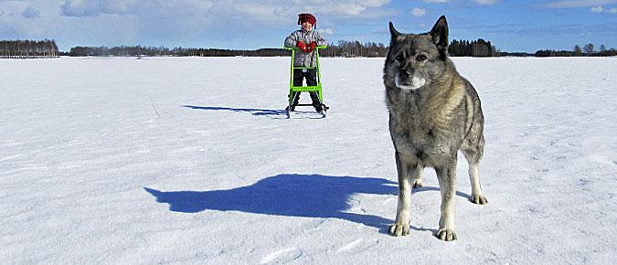 Koira ja lapsi
